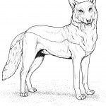 Wolf Coloring Pages for Kids Image