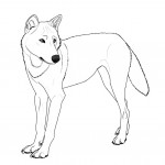 Wolf Coloring Pages for Kids Photos