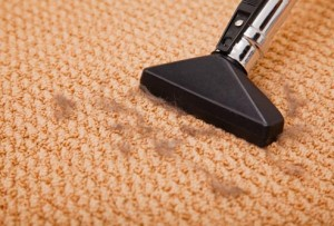 How To Get Rid of Fleas in Carpet